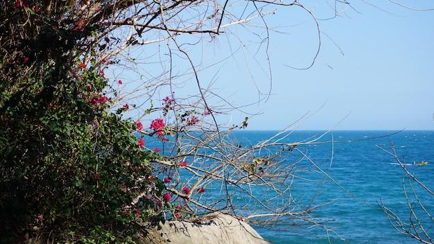 Różowe kwiaty na niebieskim tle. wysuszyć trzy na tle jasnoniebieskiego morza.