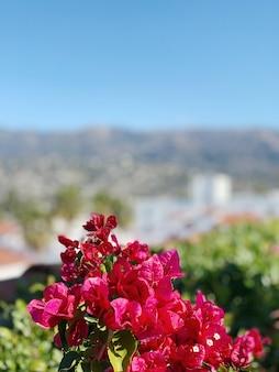 Różowe kwiaty na nieostre tło