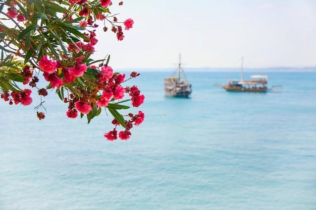 Różowe kwiaty na tle błękitnego morza i statków