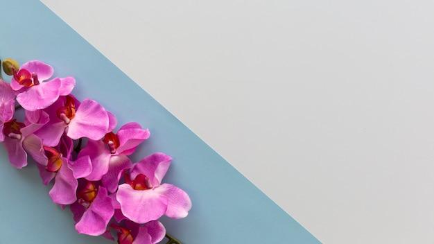 Różowe kwiaty orchidei ułożone na rogu podwójnego tła