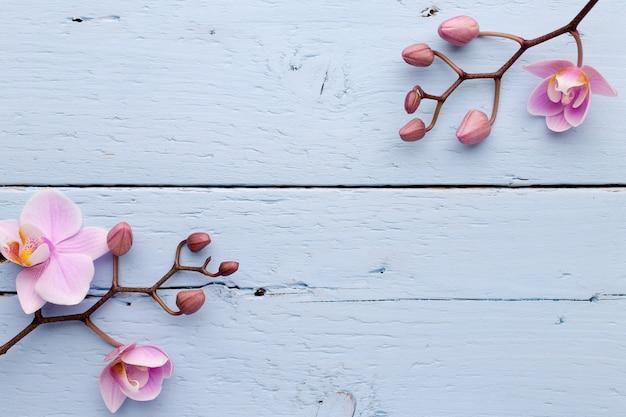 Różowe kwiaty orchidei