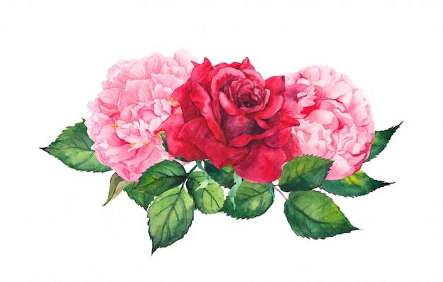 Różowe kwiaty piwonii i czerwone róże. akwarela