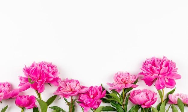 Różowe kwiaty piwonii na białym tle z miejscem na kopię