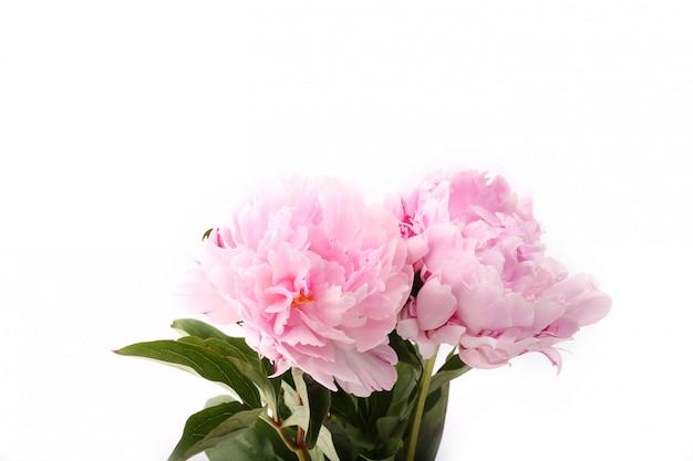 Różowe kwiaty piwonii