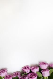 Różowe kwiaty róż na dole białe tło. symbol elegancji, czułości i wyrafinowania. koncepcja wolnej przestrzeni