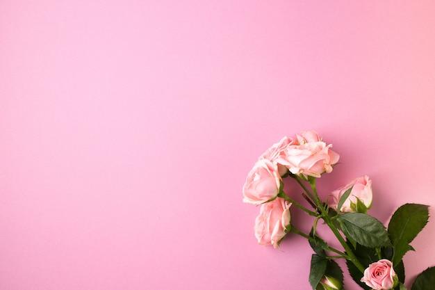 Różowe kwiaty róży na pastelowym różu