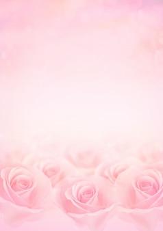 Różowe kwiaty róży