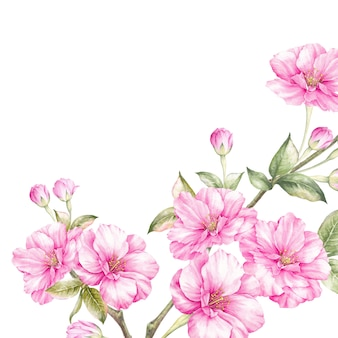 Różowe kwiaty sakura oddział.