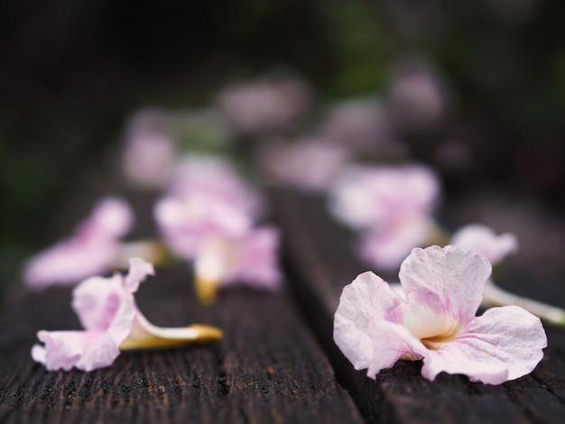 Różowe kwiaty trąbka spada na drewnianej ławce