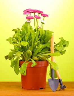 Różowe kwiaty w doniczce z instrumentami na drewnianym stole na zielonym tle