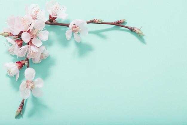 Różowe kwiaty wiśni na zielonym tle