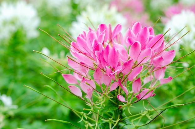 Różowe kwiaty z niewyraźne wzory tła