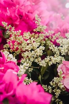 Różowe kwiaty z zielonymi liśćmi