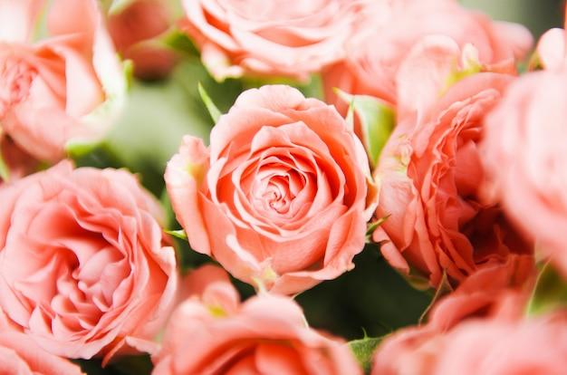Różowe małe róże w bukiecie. tło kwiatowy