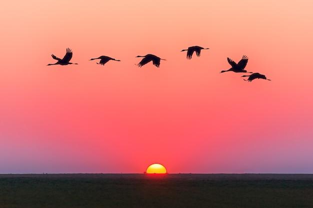 Różowe niebo zachód słońca i latające ptaki