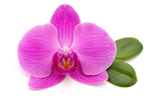 Różowe orchidee na białej powierzchni.
