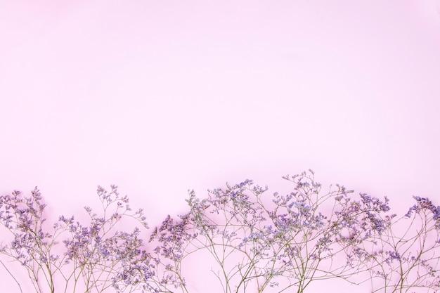 Różowe pastelowe tło z suszonymi kwiatami, miejsce na kopię, płasko świecki, tekst