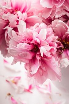 Różowe piwonie w wazonie na białym tle