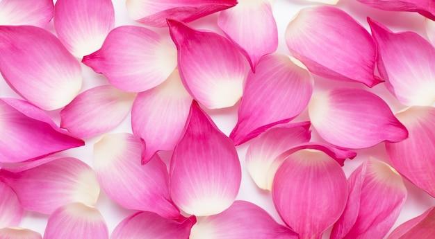 Różowe płatki kwiatów lotosu na stole.