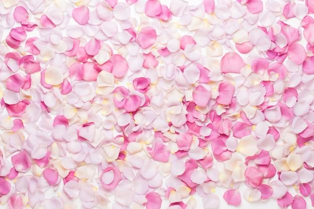 Różowe płatki kwiatów róży na białym tle. leżał na płasko, widok z góry, miejsce na kopię.