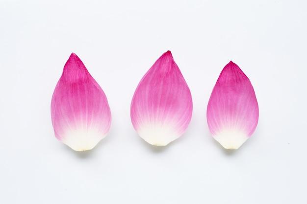 Różowe płatki kwiatu lotosu na białej powierzchni.
