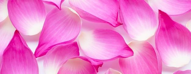 Różowe płatki kwiatu lotosu na tle.