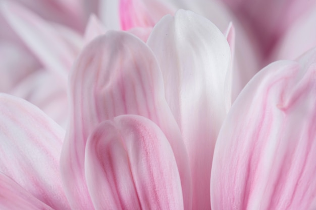 Różowe płatki makro natura makro