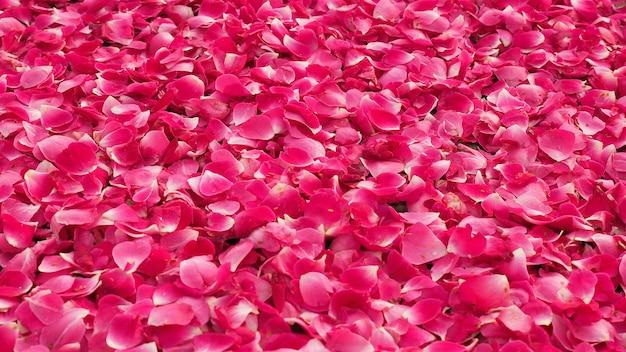 Różowe płatki róż tło