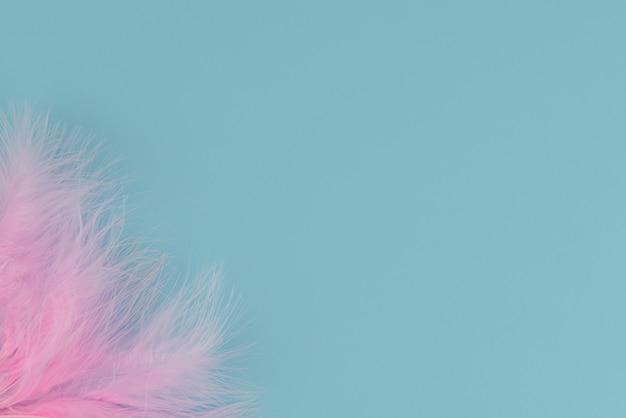 Różowe puszyste pióra na niebieskim tle. ubrania są w kącie. odosobniony. dużo miejsca na tekst. widok z góry, leżał płasko. skopiuj miejsce minimalizm.