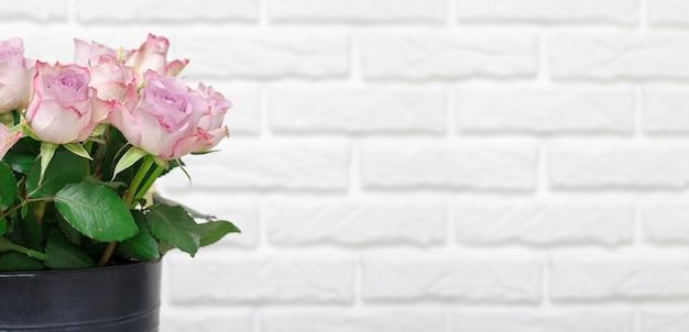 Różowe róże na białej ścianie z miejsca na kopię