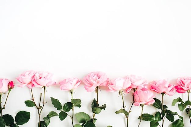 Różowe róże na białym tle. płaski świeckich, widok z góry. wzór kwiatów.