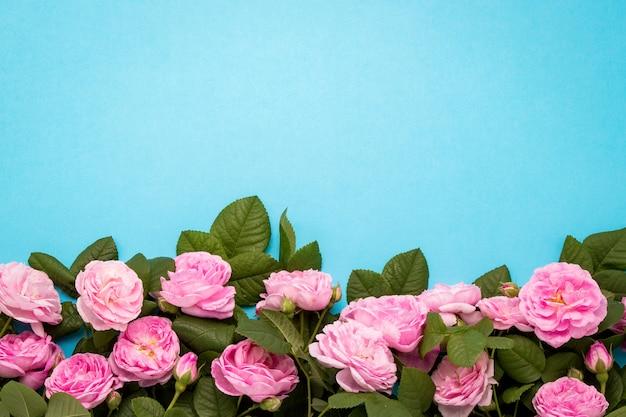 Różowe róże podszyte u dołu obrazu na niebieskim tle.