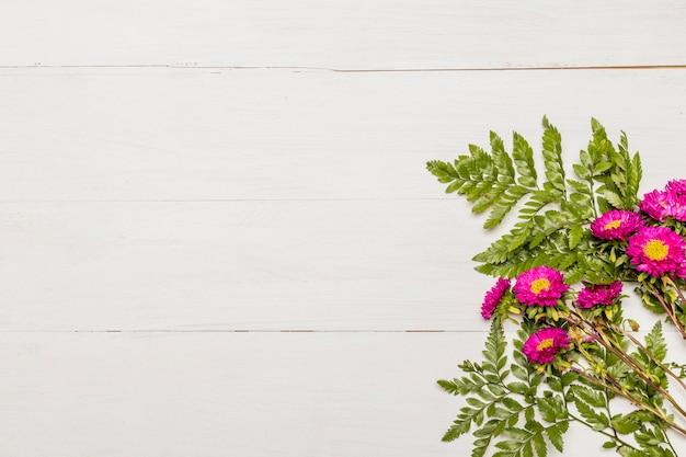 Różowe stokrotki z liśćmi na białym tle