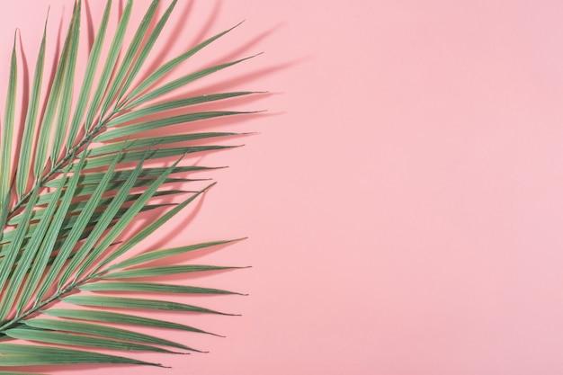 Różowe tło z zielonymi liśćmi palmowymi twarde światło i cienie poziome