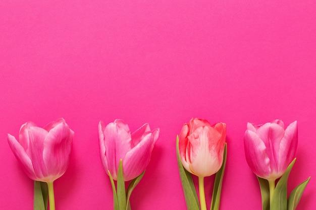 Różowe tulipany na różowej powierzchni papieru