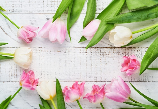 Różowe tulipany na żółtym tle.