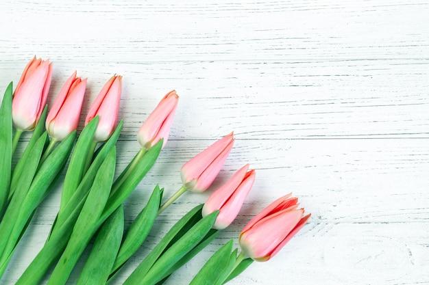 Różowe tulipany wiosna na tle białych tablic.