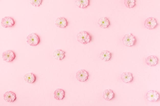 Różowe wiśniowe kwiaty kwitnące wzór na pastelowym różowym tle. leżał na płasko. widok z góry. walentynki-dzień tło. kwiatowy wzór
