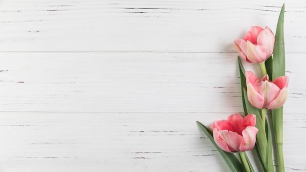 Różowi tulipany na białym drewnianym textured tle