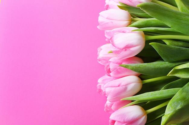 Różowi tulipany na różowym tle wielkanoc, wiosna kwiatu pojęcie, kopii przestrzeń.