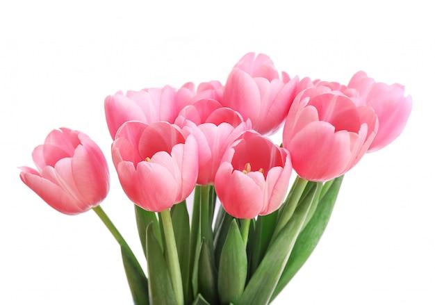 Różowi tulipany odizolowywający na białym tle