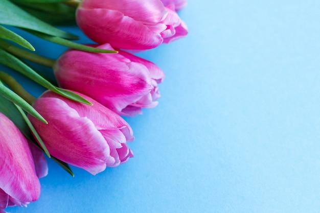 Różowi tulipany w kącie na błękitnym tle