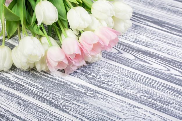 Różowo-białe bardzo delikatne tulipany na białym, szarym drewnianym tle