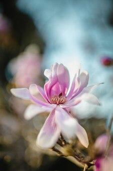 Różowo-biały kwiat w soczewce z funkcją tilt shift