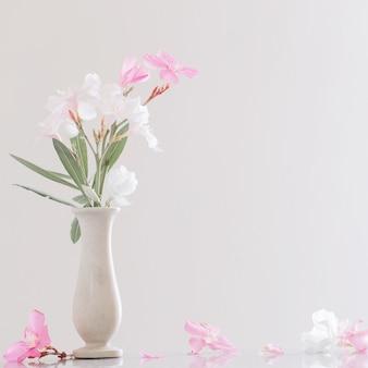 Różowo-biały oleander w wazonie