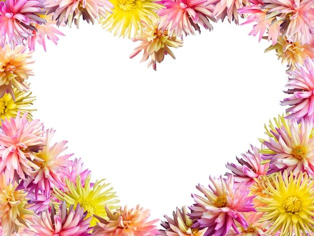 Różowo-żółte kwiaty dalii ustawić formę ramki w kształcie serca (na białym tle, proporcje 4 do 3 stron)