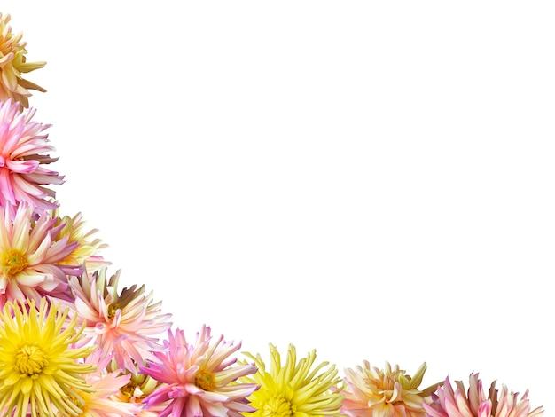 Różowo-żółte kwiaty dalii zestaw narożnej ramki (na białym tle)
