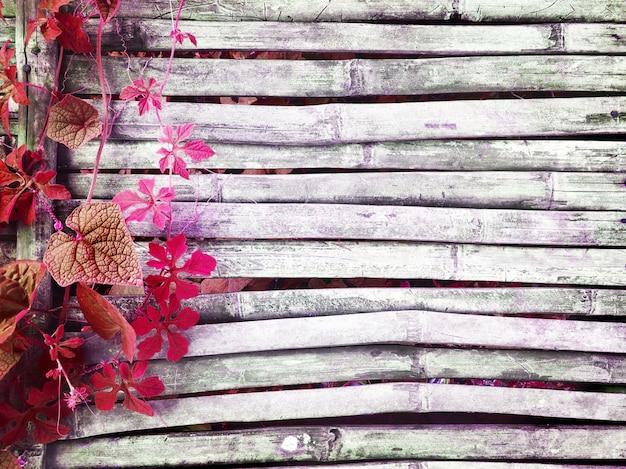 Różowy bluszcz porusza się na starym ciemnym bambusowym drewnianym wieśniaka domu podłoga ma kopii przestrzeń dla tła