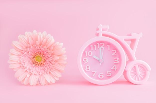 Różowy budzik i kwiat gerbera na różowym tle.