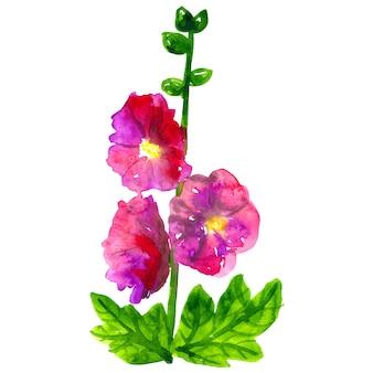 Różowy fioletowy ślaz z liśćmi. ręcznie rysowane akwarela ilustracja. odosobniony.